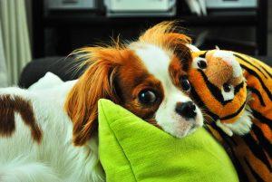 Pet Friendly Lismore Accommodation